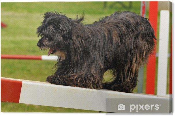 Obraz na płótnie Pies zwinność - Ssaki