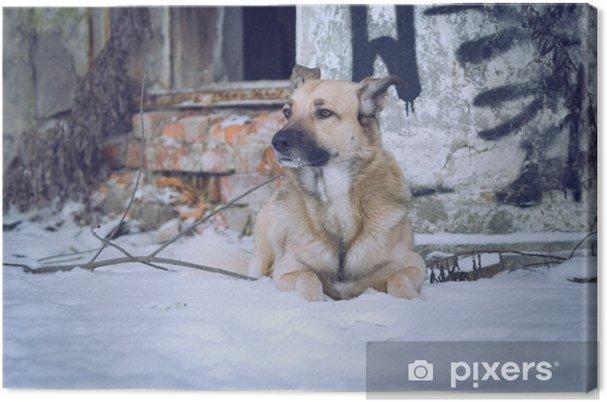 Obraz na płótnie Pies - Ssaki