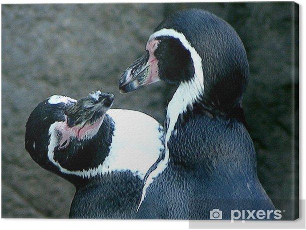 Obraz na płótnie Pingwiny 1 - Ptaki