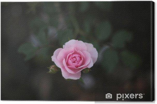Obraz na płótnie Pink Rose - Kwiaty