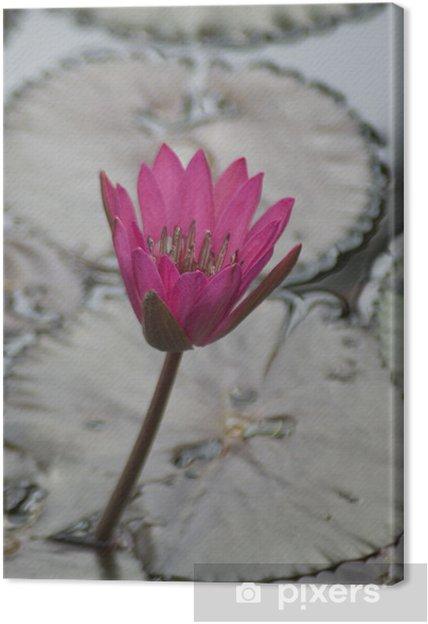 Obraz na płótnie Pink water lilly - Kwiaty