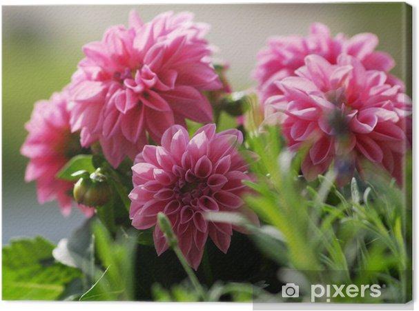 Obraz na płótnie Pinkrosa Chriysantheme - Kwiaty