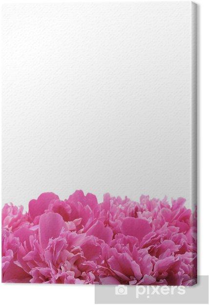 Obraz na płótnie Piwonia na białym tle - Kwiaty