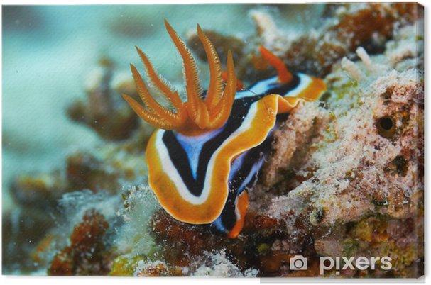 Obraz na płótnie Piżamy chromodorid - Zwierzęta żyjące pod wodą