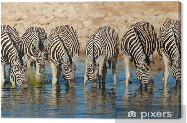 Obraz na płótnie Plains woda Zebry pitnej, Etosha National Park - Tematy
