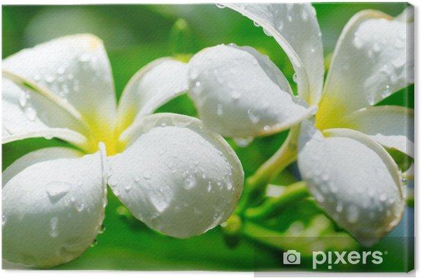 Obraz na płótnie Plumeria - Kwiaty