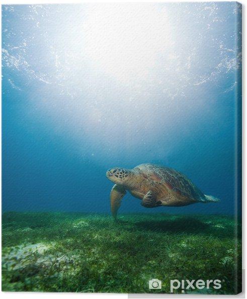 Obraz na płótnie Pływanie żółw morski w słońcu - Inne Inne