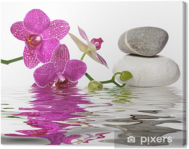 Obraz na płótnie Po prostu piękne orchidee - Bestsellery