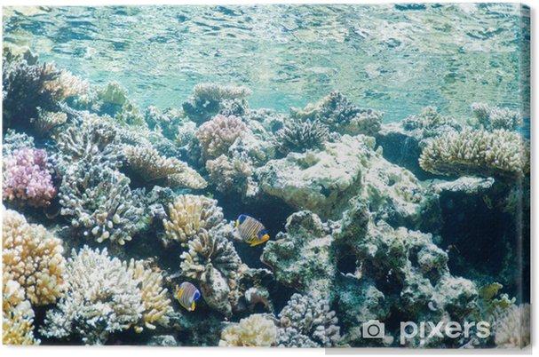 Obraz na płótnie Podwodny krajobraz - Pod wodą