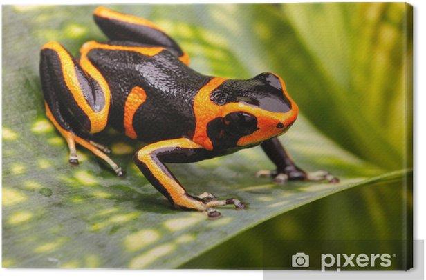 Obraz na płótnie Poison dart frog - Inne Inne