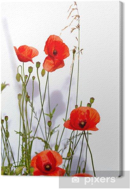 Obraz na płótnie Pojedyncze czerwone maki - Kwiaty