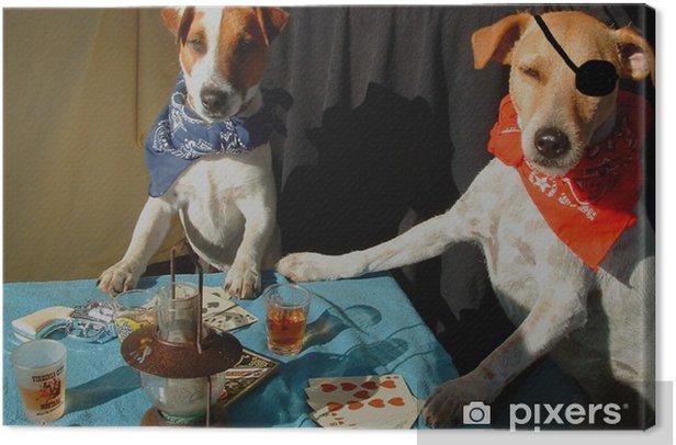 Obraz na płótnie Poker Critter gwiazda - wersja kolorowa - Zwierzęta