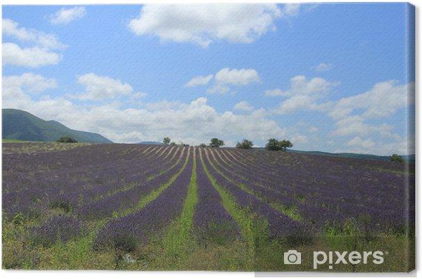 Obraz na płótnie Pola lawendy w pobliżu Sault, Francja - Krajobraz wiejski