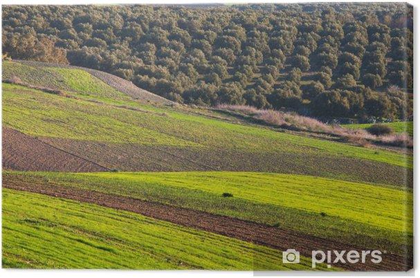 Obraz na płótnie Pola w Maroku - Rolnictwo