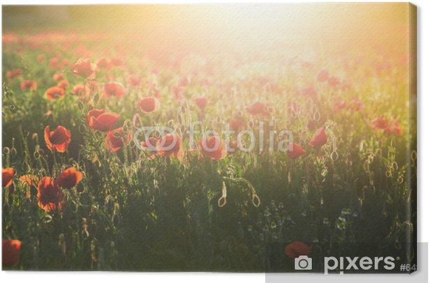 Obraz na płótnie Pole czerwone maku w jasnym świetle wieczorem - Kwiaty