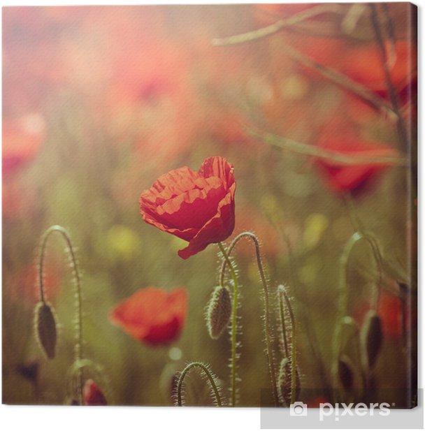 Obraz na płótnie Pole czerwonych maków - Pory roku