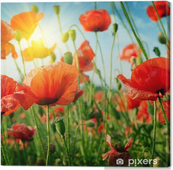 Obraz na płótnie Pole maków w promieniach słońca - Tematy