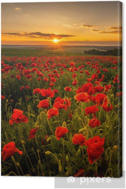 Obraz na płótnie Pole makowe o zachodzie słońca -