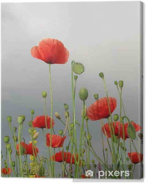 Obraz na płótnie Pole maku 4 - Kwiaty