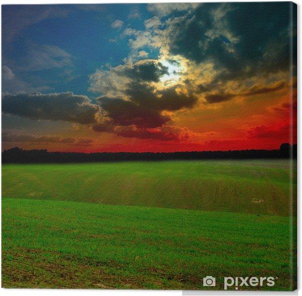 Obraz na płótnie Pole o zachodzie słońca - Tła