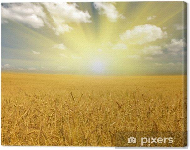 Obraz na płótnie Pole pszenicy złota pod chmurami - Tematy