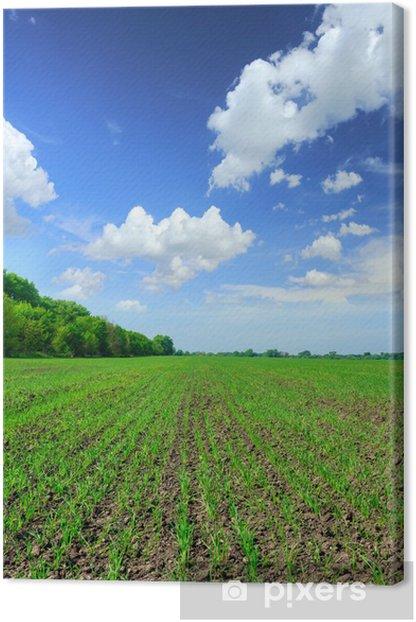 Obraz na płótnie Pole pszenicy - Rolnictwo