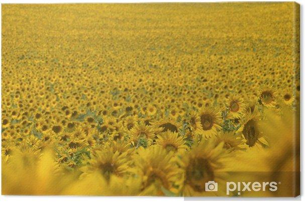Obraz na płótnie Pole słonecznika, w kwiat - Style