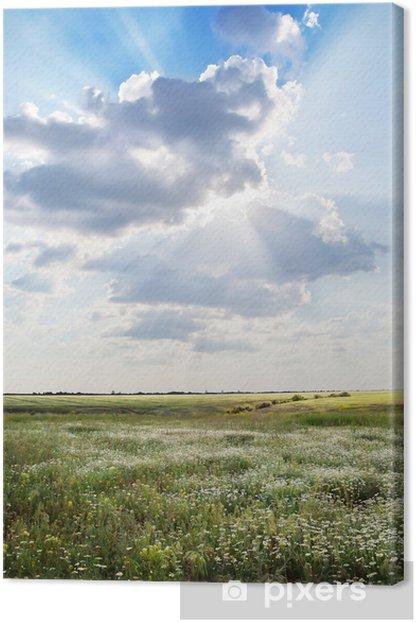 Obraz na płótnie Pole z kwiatów pod słońcem - Pory roku