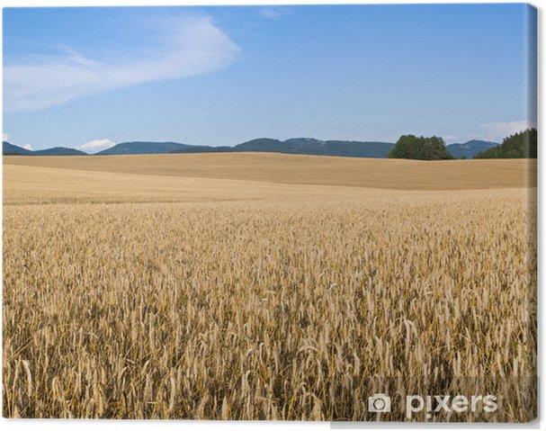 Obraz na płótnie Pole złote ziarna - Rolnictwo