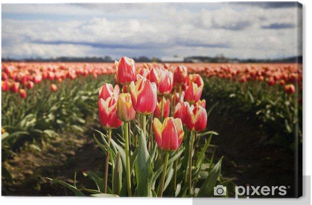 Obraz na płótnie Pomarańczowe tulipany - Kwiaty