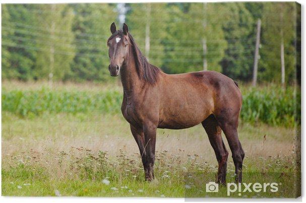 Obraz na płótnie Portret brązowy koń - Ssaki