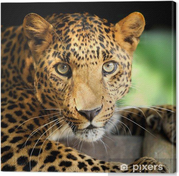 Obraz na płótnie Portret leopard - Ssaki