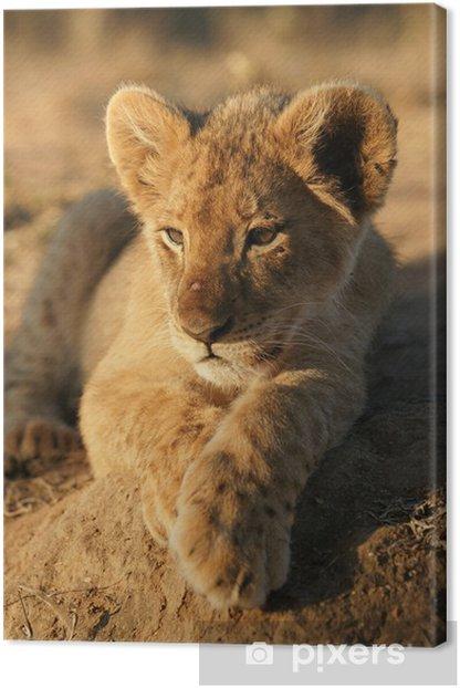 Obraz na płótnie Portret lion cub - Tematy