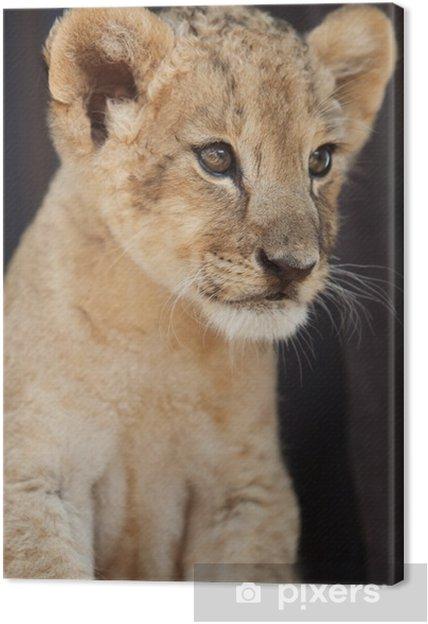Obraz na płótnie Portret małego lwiątko - Tematy