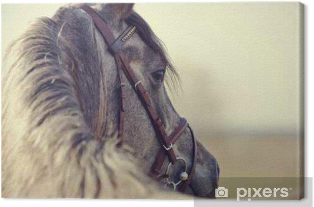 Obraz na płótnie Portret ogiera sportowym - Zwierzęta