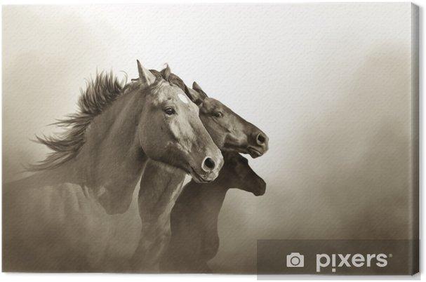 Obraz na płótnie Portret trzech koni mustanga w zachód mc - Zwierzęta