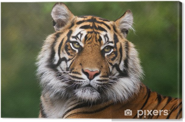 Obraz na płótnie Portret Tygrys bengalski - Tematy