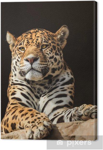 Obraz na płótnie Portret z bliska, jaguar lub onca Panthera - Ssaki