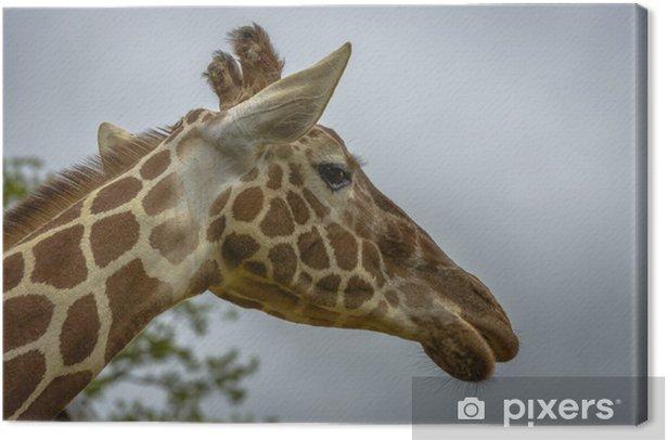Obraz na płótnie Portret Zabawna żyrafa - Tematy