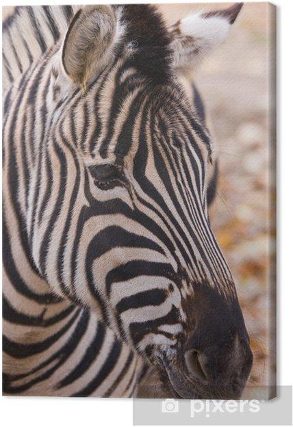 Obraz na płótnie Portret zebra - Tematy
