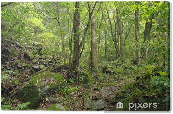 Obraz na płótnie Promenada lesie Mossy - Sporty na świeżym powietrzu