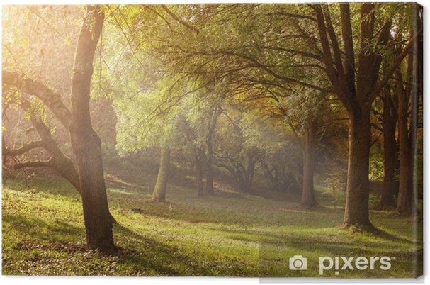 Obraz na płótnie Promień światła przez drzewa w mglisty poranek - Pory roku