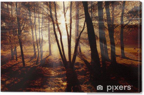 Obraz na płótnie Promienie słoneczne - Lasy