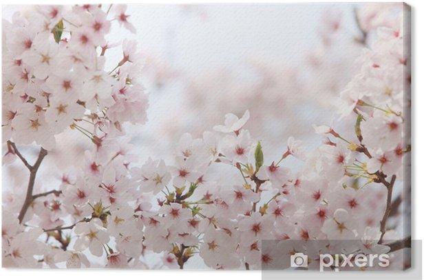 Obraz na płótnie Prunus yedoensis - Kwiaty