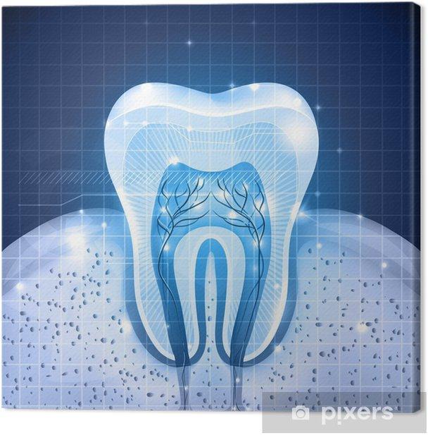 Obraz na płótnie Przekrój piękny niebieski ząb. Szczegółowa anatomia - Zdrowie i medycyna