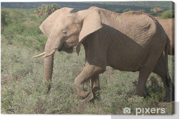 Obraz na płótnie Przesuwając uszy słonia - Tematy