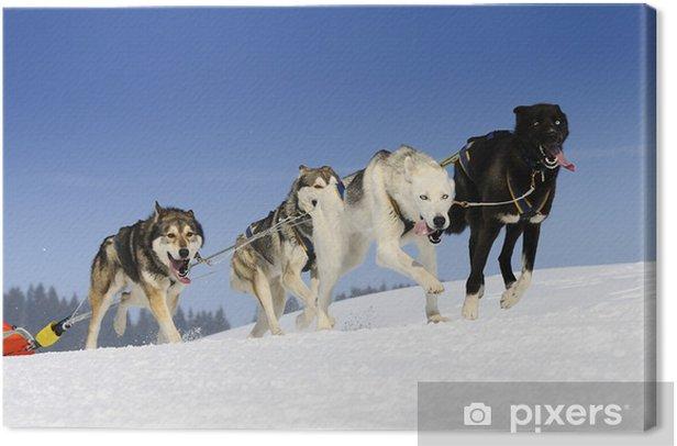 Obraz na płótnie Psy sportive - Ssaki