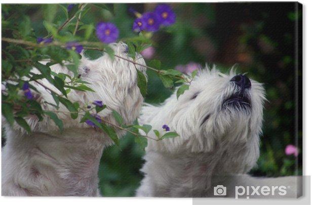 Obraz na płótnie Psy wąchania - Ssaki