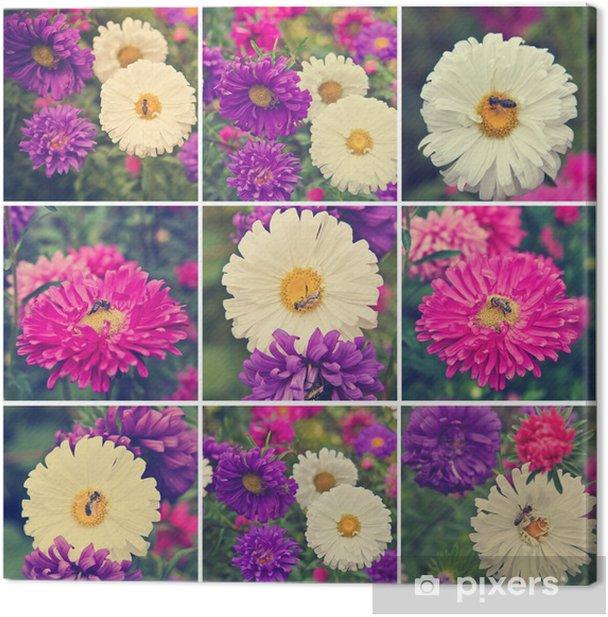 Obraz na płótnie Pszczoła na kolaż kwitnienia astry - Kwiaty