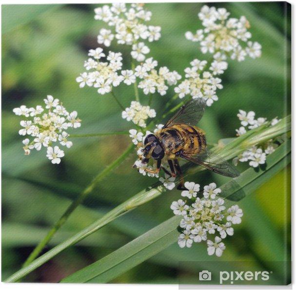 Obraz na płótnie Pszczoła - Inne Inne